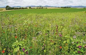 Landwirte setzen Projekt zum Erhalt der Artenvielfalt um