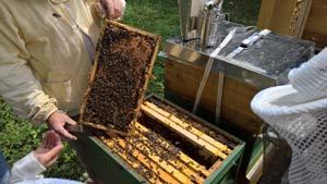 Bienen-Patenfest-2017