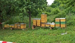 Bienen-Patenfest