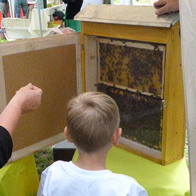 Schaukasten-mit-Bienen.jpg