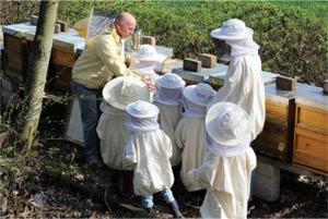 Wie-machen-Bienen-Honig.jpg