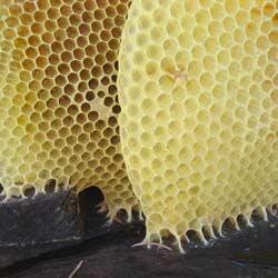 Echtes Bienenwachs vom Imker
